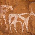 Tassili du Kozen. Roof of shallow cave. Paintings of cattle facing right superimposed on paintings of animals facing right. Top, bichrome cow white with small circular red markings, white tasselled tail and small red horns; middle red cow facing right superimposing white animal; bottom, white and red cow facing right and white bull with red markings now faded. Faded bichrome man facing fowards. Horse/Camel Period. Image ID: chatdk0010135