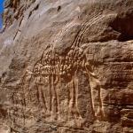 Messak Plateau, Libya, LIBMES0070022