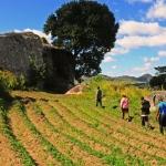 Mphunzi, Malawi, malmph0010001