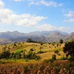 Nsama wa ng'ombi, Malawi, malnsa0010001