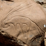 Atlas Mountains, Morocco. Very fine Tazina-style outline engraving of antelope with head tucked down and elongated horns. Fairly recent scratched graffiti. Image ID: moratm0010213