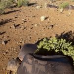 Engravings on a boulder at an important site in the Northern Cape apparently depicting mythical animals, SOANTC0050004
