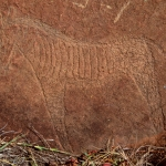 Detailed engraving of a zebra in the former Southern Transvaal, SOASTR0010036