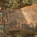 Block-pecked white rhinoceros facing left. Image ID: soantc0030005