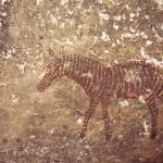 Finely detailed bichrome zebra. Mashonaland, Zimbabwe. Image ID: zimmsl0240020